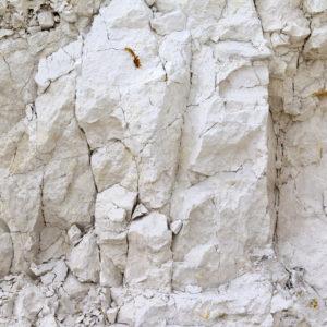 Cretaceous Chalk